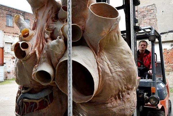 نمایش قلب 272 کیلوگرمی نهنگ آبی در یک موزه