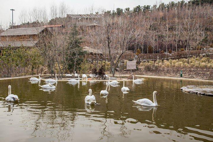 رهاسازی انواع پرنده در فاز 2 باغ پرندگان