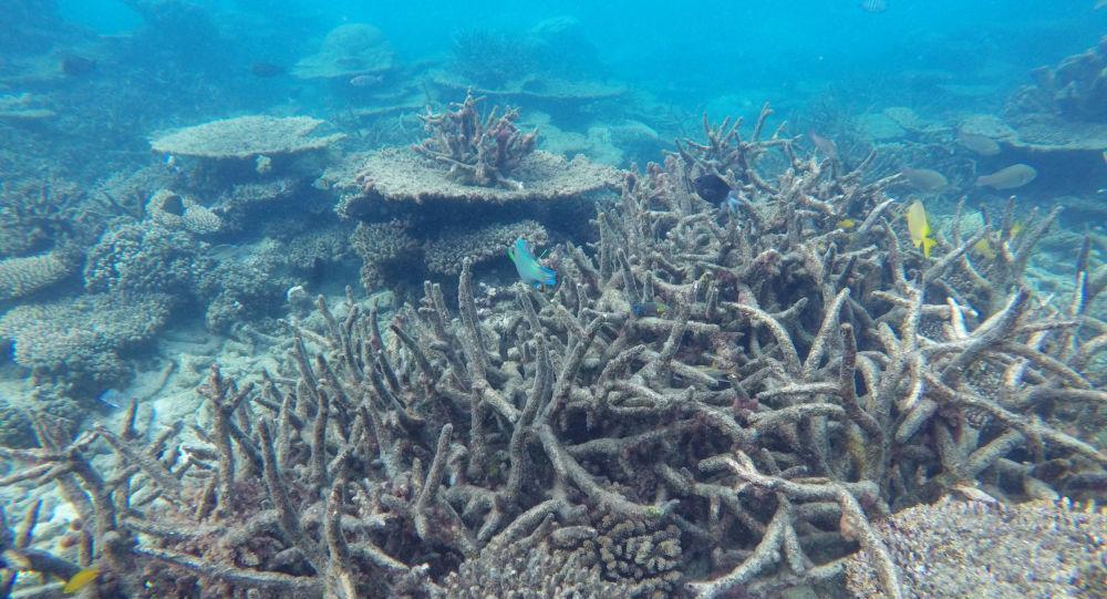 محققان هزاران حفره عجیب در اعماق اقیانوس کشف کردند