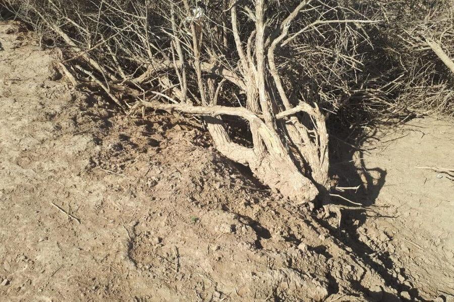 دستگیری عاملان قطع درختان جنگلی در پارک ملی دز