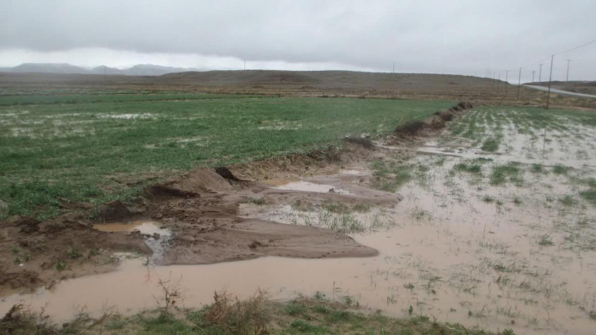 خبرنگاران بارش ها 250 میلیارد تومان به بخش کشاورزی کرمانشاه خسارت زد