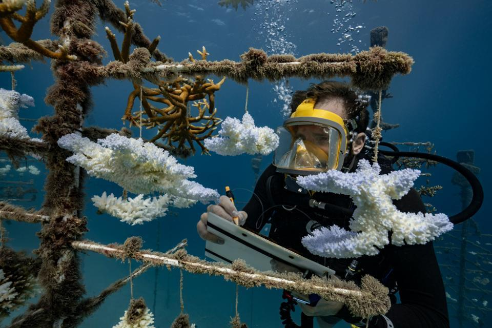 هوش مصنوعی به کمک نجات صخره های مرجانی می آید ، روبات ها به صف!