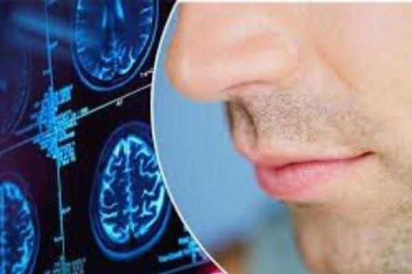 حس بویایی را چگونه بعد از بیماری های ویروسی برگردانیم؟