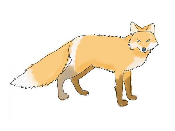 ایده های متنوع نقاشی روباه برای بچه ها برای رنگ آمیزی